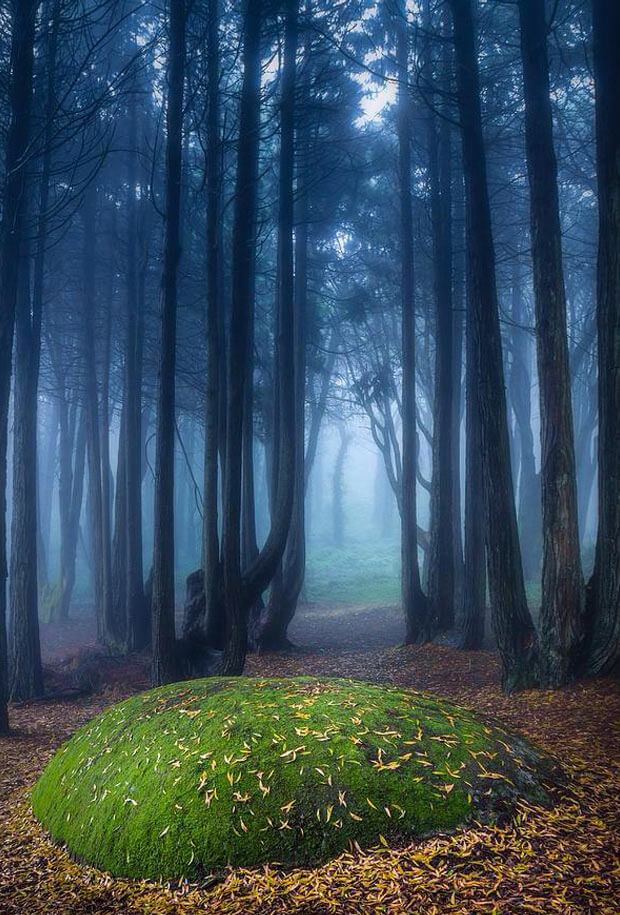 Unreal Travel Destination - The-Mystic Forest, Sintra, Portugal